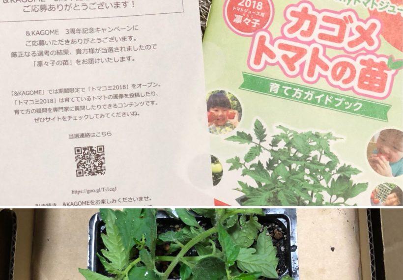 &KAGOME 3周年記念キャンペーン応募で トマトの苗